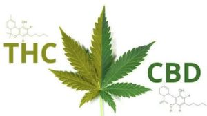 CBD oil in Uk and medicinal cannabis doctors